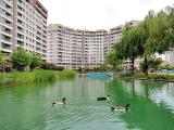 sinpaş liva turkuaz da havuz manzaralı tüm sosyal alanları olan havuzlu site içinde 1 + 1 daire nakit satılık